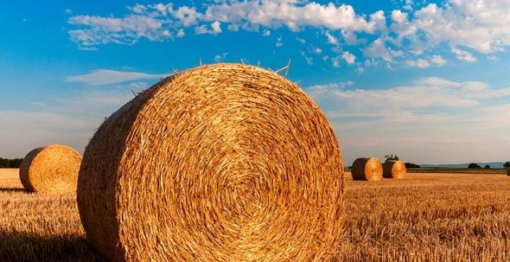 Programmi di sviluppo rurale, la Regione Piemonte ha erogato il 95% dei contributi