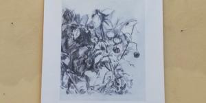 herbarium_2.jpeg